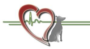 Fizjoterapia zwierzat domowych - Fizjoterapia zwierząt domowych